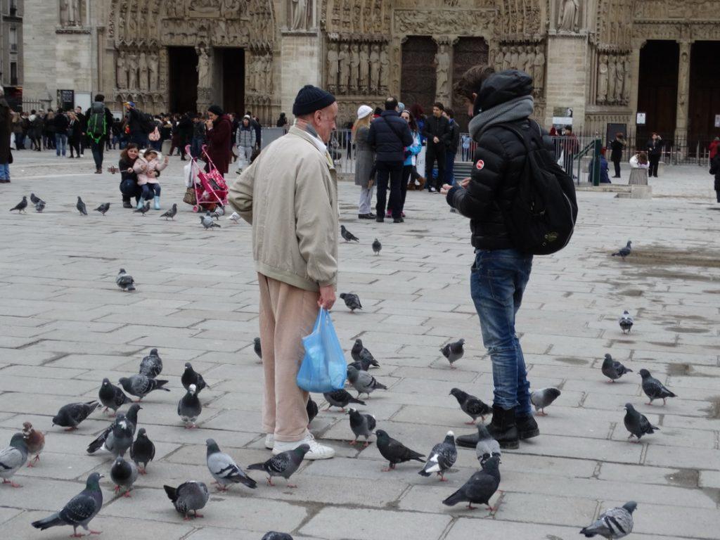 Дедушка и голуби