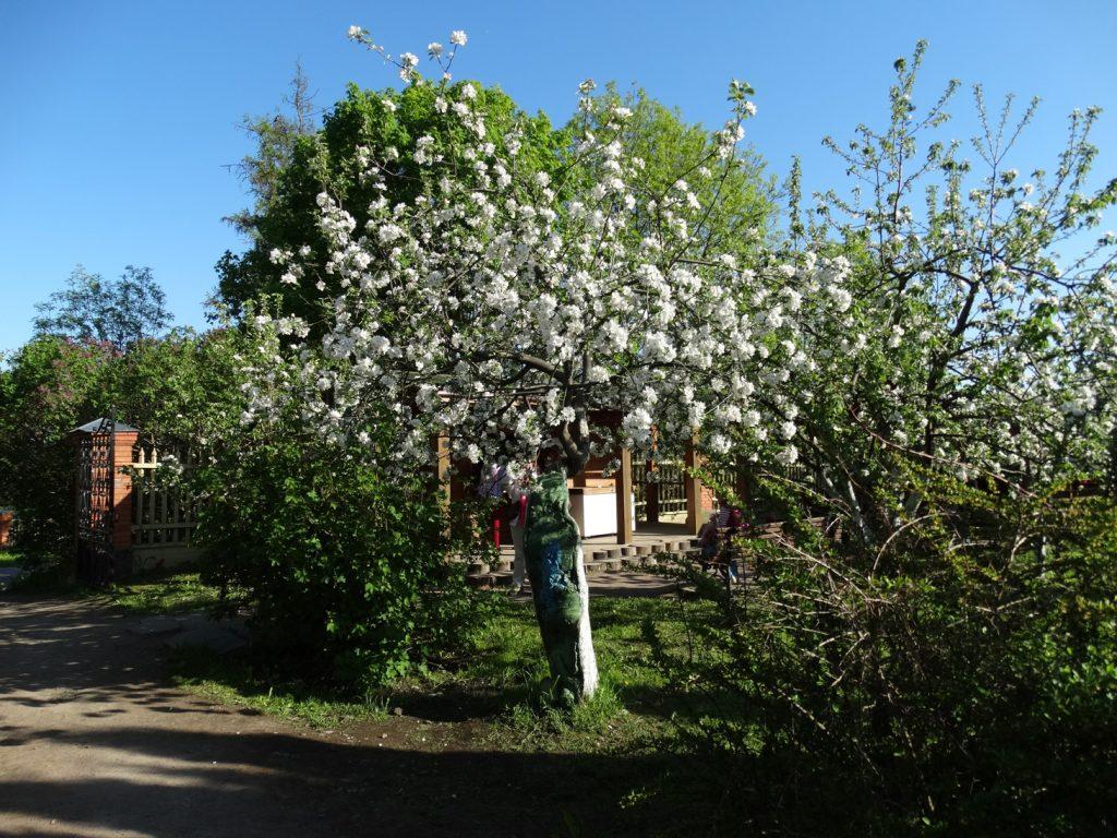Валаам. Монастырский сад